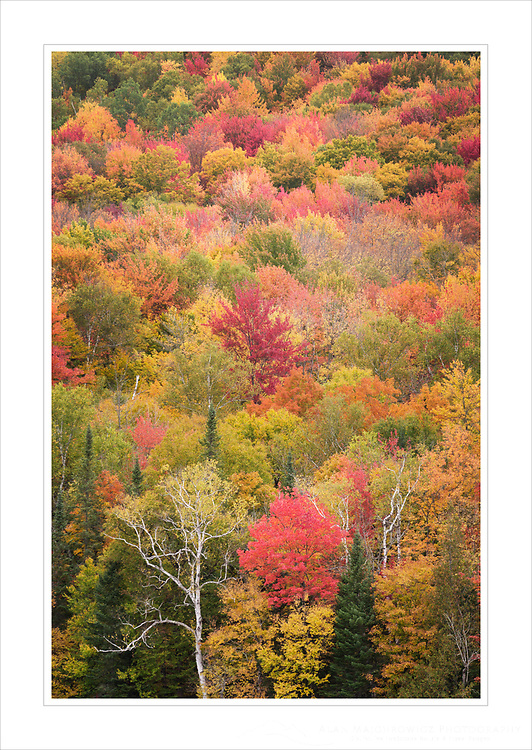 Fall Foliage, Groton Woods, Vermont