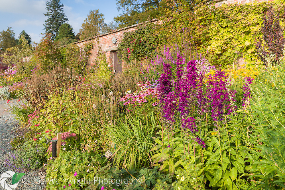 Colouful herbaceous borders in the Walled Garden at Holehird Gardens, Cumbria, photographed in October. Planting includes Lobelia, Echinacea and Lythrum