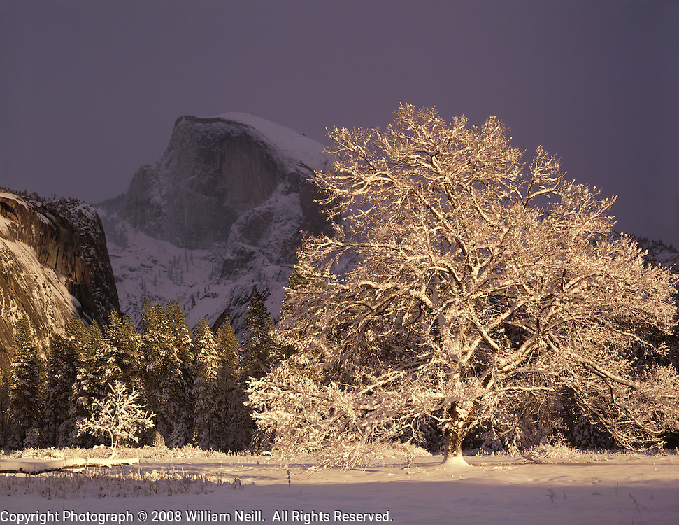 Half Dome and elm tree, winter, Yosemite National Park, California