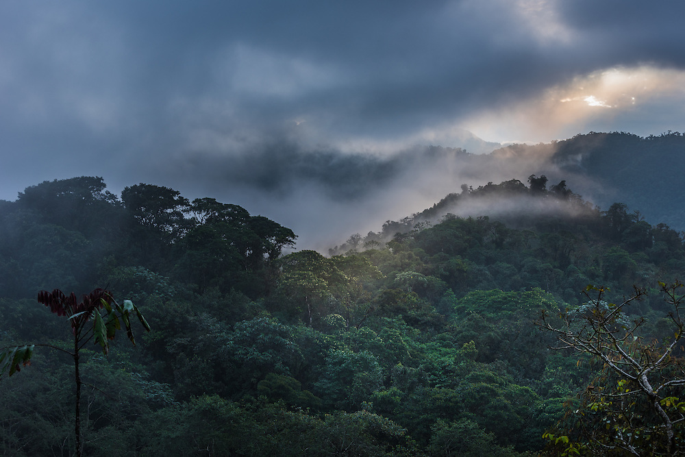 A ray of sunlight breaks through the clouds of the Santa Lucia Cloud Forest, Ecuador.