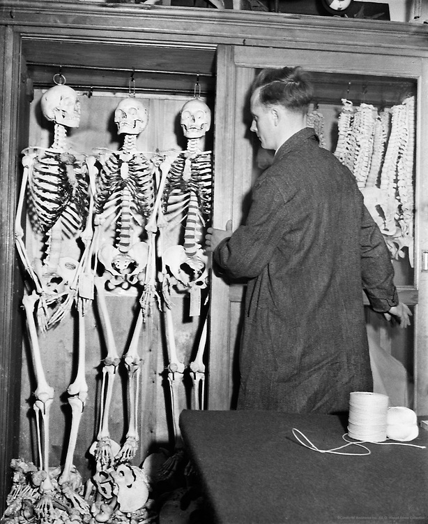 Man Working in Adam Rouilly & Co., Skeleton Shop, London, c.1939