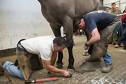 © Licensed to London News Pictures. 20/02/2016. Competitors take part in the World Farrier Championships, Knightsbridge Barracks, London on Saturday 20th February 2016. Forty eight competitors come from all over the world practice an ancient skill to compete to be the Master Farrier. Photo credit: Max Bryan/LNP