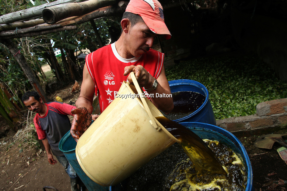 A worker pours a liquid, including gasoline and diesel, into a barrel full of coca leaf at a lab in a remote area of the southern Colombian state of Nariño, on Monday, June 25, 2007. (Photo/Scott Dalton)