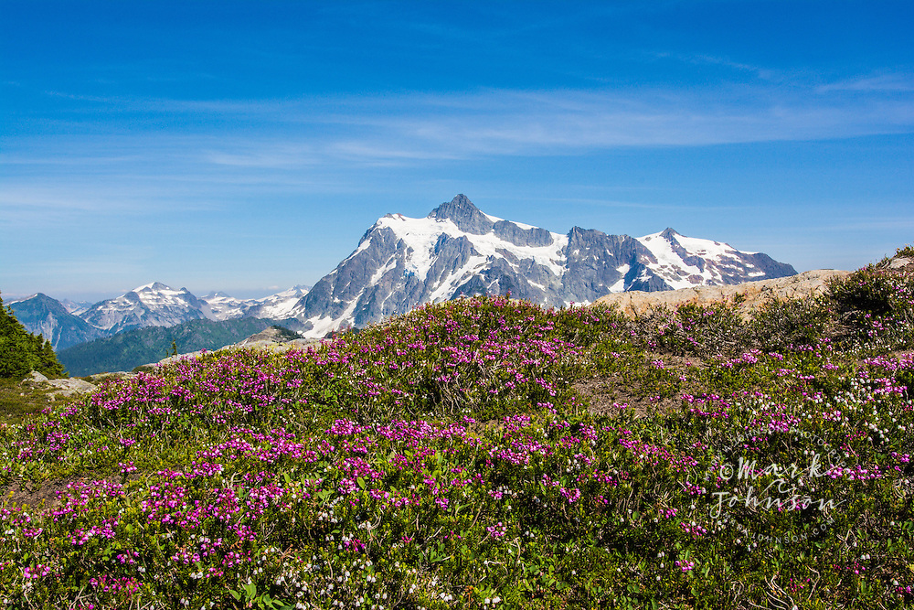 Mount Shuksan & wildflowers, Mt. Baker-Snoqualmie National Forest, Cascade Range, Washington, USA