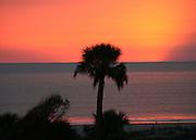 An intense Jekyll Island Georgia sunrise with a palm tree silhoette.