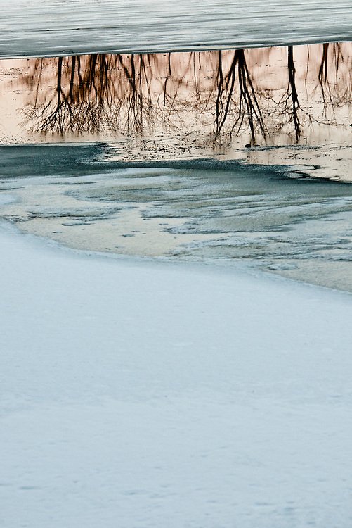 Photograph of trees reflected in a small body of partially frozen water in a wetland in Vermont.