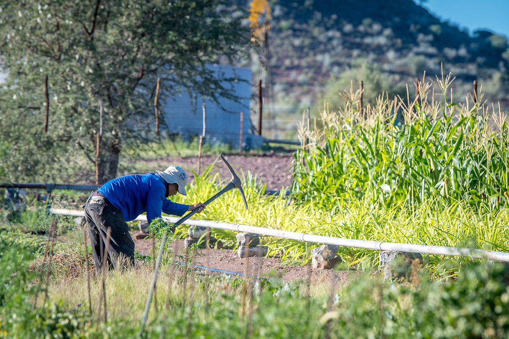 Farm worker using a pickaxe while working in a garden on Dabis Guest Farm in Helmeringhausen, southern Namibia, Africa.