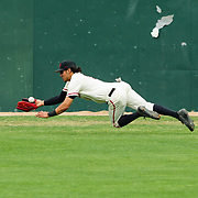 15 April 2018: San Diego State outfielder Julian Escobedo (1) dives for a ball in the left center field gap during the third inning against Fullerton. The San Diego State baseball team closed out the weekend series against Cal State Fullerton with a 9-6 win at Tony Gwynn Stadium. <br /> More game action at sdsuaztecphotos.com