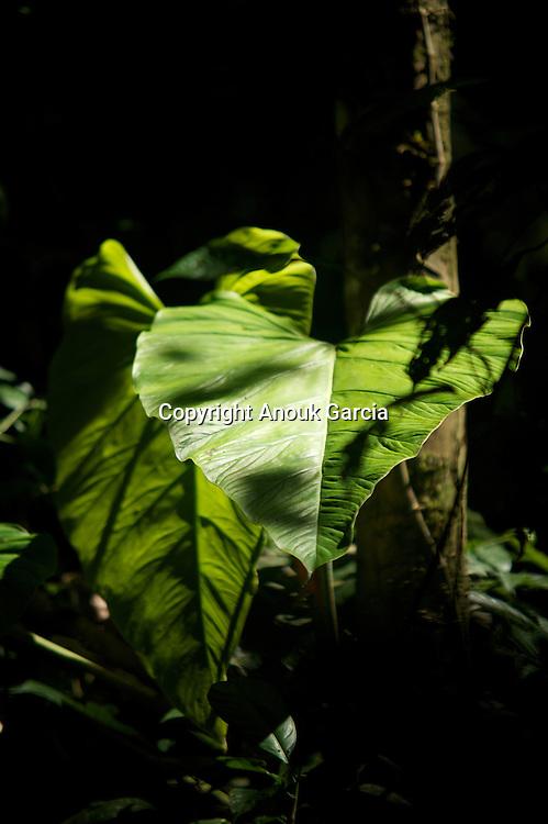 Initiation à la forêt amazonienne avec Tchika Yawanawa