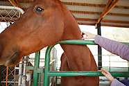 Pigasus Horse Ranch