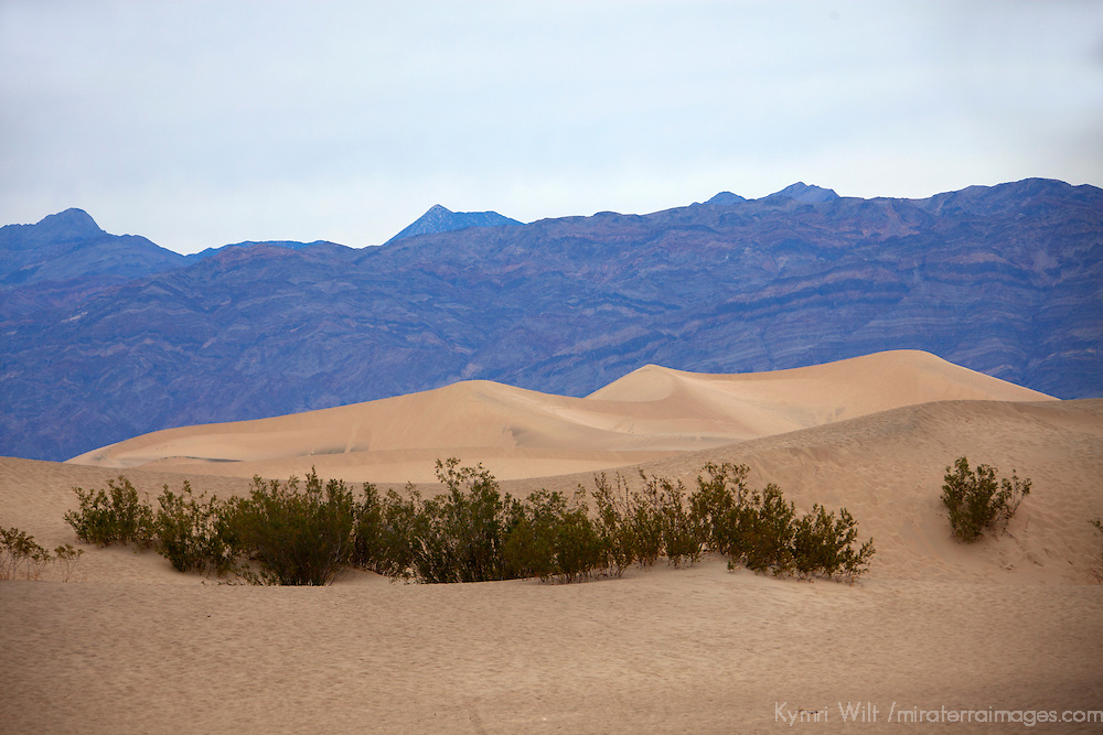 USA, California, Death Valley. Mesquite Flat Dunes