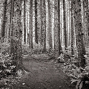 Forest on Cape Mears