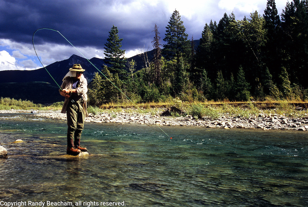 Flyfishing bull trout on the Wigwam River in summer. Southeast British Columbia