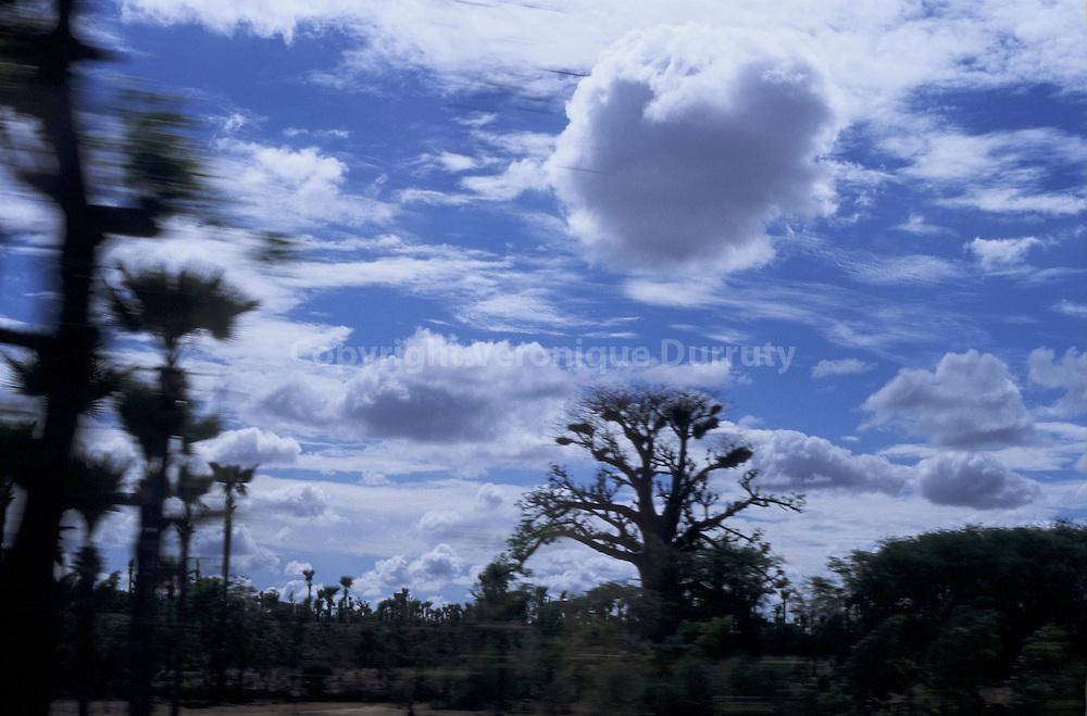LE BAOBAB SOUS SON NUAGE, SENEGAL