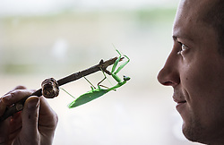 © Licensed to London News Pictures. 03/01/2017. London, UK. Zookeeper Jamie Mitchell holds up a Preying Mantis at the London Zoo annual stocktake. Photo credit: Rob Pinney/LNP