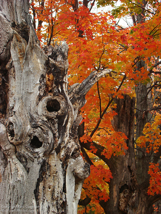 Old Tree, Mission Peninsula Michigan
