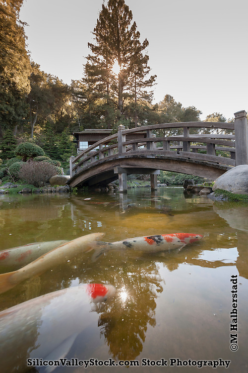 Hakone Gardens is a traditional Japanese garden in Saratoga, California, USA. It claims to be the oldest Japanese-style residential garden in the Western Hemisphere.
