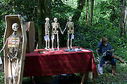 Skeleton stands upright next to table of scaled models of human bones display by Christadelphian Church in Nunhead Cemetery.