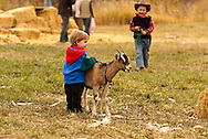 Kids, play, goat, farm