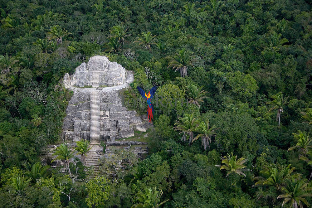 Aerial of the main temples at Lamanai Archaeological Park on the New River Lagoon, Indian Church Village, Orangewalk District, Belize