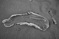 Driftwood on a black sand beach, Pololu Valley, Hawaii