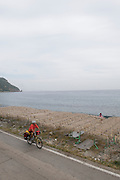 Cuttlefish, Ulleung-do Island, South Korea