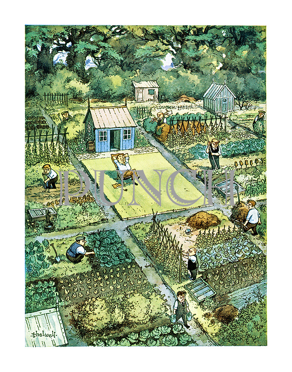 (cartoon showing a group of allotments full of people working, while one allotment is an empty lawn with a man relaxing on a deckchair)