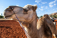Camel Cup 2012
