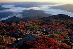 Alpine Vegetation. Fall.  Autumn colors above treeline in New Hampshire's White Mountains. Valley fog.  Summit of Mt. Madison, NH.