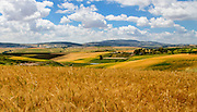 Wheat fields near Mt. Tabor village, northern  Israel.