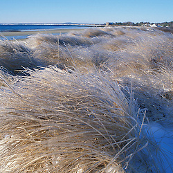 Kennebunk, ME. Ice coats the beach grass on Parson's Beach.