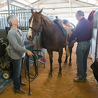 Lauren Wood | Buy at photos.djournal.com<br /> Claudia and Rick Peeler of Covington, Tennessee get their horse Molly read to practice before competing in the stables on Friday, March 10 during the annual MSU Bulldog Classic AQHA Horse Show at the MS Horse Park in Starkville. Rick was competing in the Horsemanship category later that day, and Claudia was competing in the Western Pleasure category the next day.