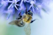 Fot  Piotr Gesicki blue flower in bloom