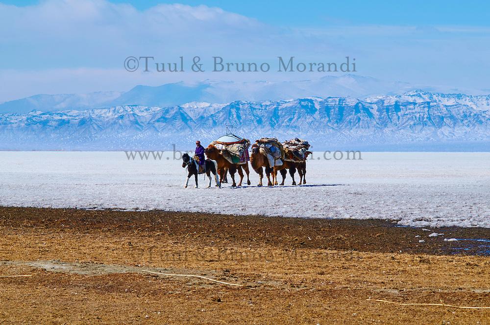 Mongolie, Province de Khovd, campement des nomades, transhumance, déménagement à dos de chameau, caravane des chameau sur le lac gelé // Mongolia, Khovd, nomad camp, transhumance, moving on the back of the camels, camel caravan on the frozen lake