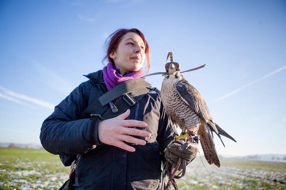 Traversetolo (Parma) - Diletta Bianchini (29), falconiera da 3 anni, da quando, dopo aver letto un annuncio sul giornale decise di fare un corso e iniziare a lavorare presso un falconiere locale.
