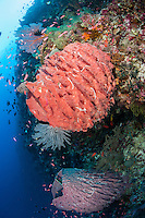 Vibrant Soft Corals and Sponges<br /> <br /> Shot in Indonesia