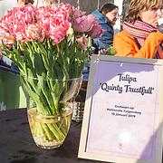 """NLD/Amsterdam/20190119 - Nationale Tulpendag 2019, doop tulp Quinty Trustfull, de Tulp die vernoemd is naar Quinty Trustfull genaamd """"Tulipa"""""""