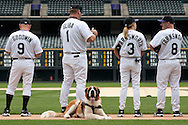 Zeus, a Saint Bernard service dog, waits patiently on Coors Field as his owner participates in a Rockies Client Batting Practice on August 8, 2013.