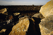 Djibouti. Kilometer 58 on the road to Assal. Landscape with black stones.
