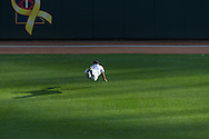 Minnesota Twins right fielder Ben Revere makes a diving catch against the Baltimore Orioles at Target Field in Minneapolis, Minnesota on July 16, 2012.  The Twins defeated the Orioles 19 to 7 setting a Target Field record for runs scored by the Twins.  © 2012 Ben Krause