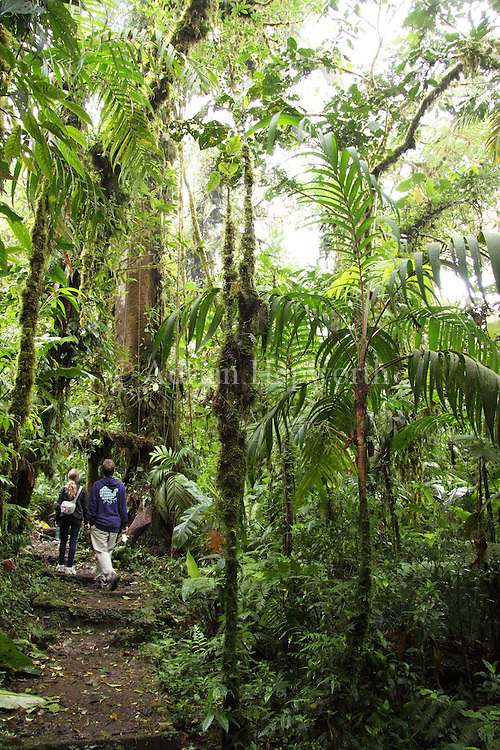 Hikers in Monteverde Cloud Forest Preserve, Costa Rica. <br />