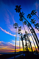 Along the beach, Cabrillo Boulevard, Santa Barbara, California USA