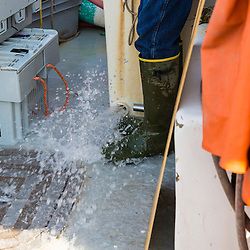 Water being emptied from the hold on a boat at the Friendship Lobster Co-op in Friendship, Maine.