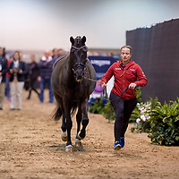 Horse Inspection - FEI World Cup Dressage Final - Omaha 2017