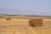 Bales of straw in a wheat field after harvest. Photographed in The Galilee, Israel in June