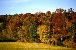 TN: Tennessee Great Smoky Mountains National Park, Mtns, Cades Cove, Fall color          .Photo Copyright: Lee Foster, lee@fostertravel.com, www.fostertravel.com, (510) 549-2202.Image: tnsmok215