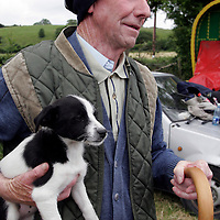 Tom Stack with one of his pups at the Spancilhill Horse Fair on Friday.<br />