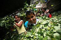 Children play in coca leaves at a lab where the leaves will be processed into coca paste, in a remote area of the southern Colombian state of Nariño, on Monday, June 25, 2007. Although government efforts to eradicate coca have reached many parts of Colombia, still the coca business thrives. (Photo/Scott Dalton)