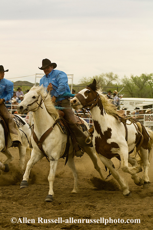 Pickup men Jay Shaw and Kyle Shaw, father and son, pick up saddle bronc, Miles City Bucking Horse Sale, Montana, <br /> MODEL RELEASED