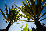 Brumadinho _ MG, 29 de Abril de 2008..Fotos externas dos jardins e galerias do Centro de Arte Contemporanea Inhotim. ...Foto: BRUNO MAGALHAES / AGENCIA NITRO